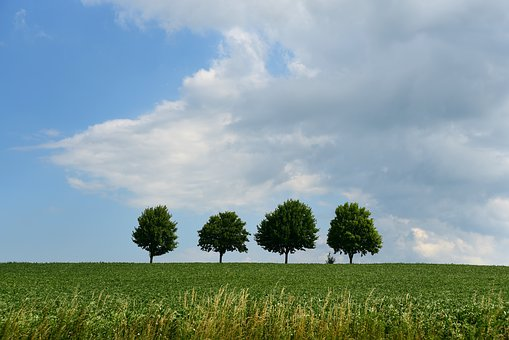 Trees, Landscape, Background, Four, Quadruplets, Meadow