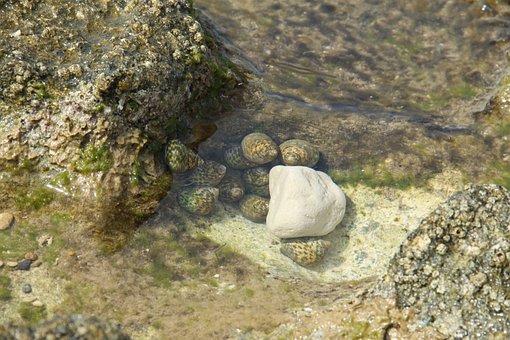 Seashore, Haifa, Israel, Rock, Water