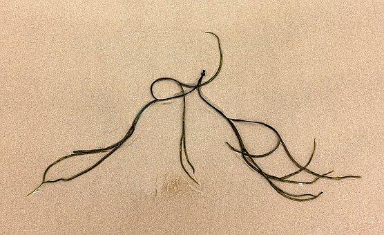 Seaweed, Sand, Sea, Weed, Pattern, Simple, Curve