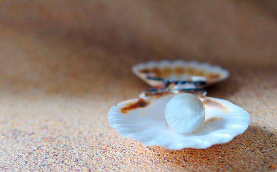 Shell, The Beach Pearl, Beach, Sand, Seashell, Sea