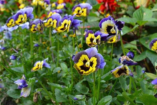 Purple Yellow Flowers, Guandu Buddhist Temple, Taipei