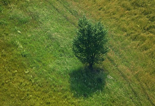 Tree, Meadow, Bird's Eye View, Grass, Landscape, Summer