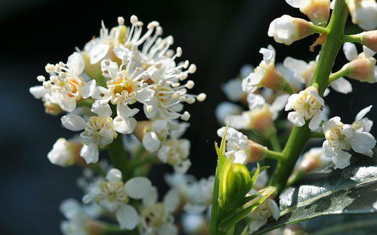 White, Flowers, Bloom, Natural, Summer, Plant