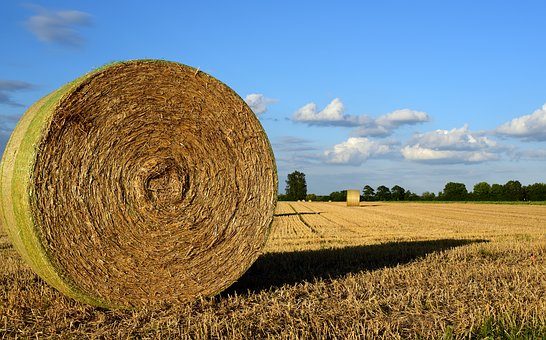 Hay, Hay Bales, Agriculture, Field, Harvest, Nature