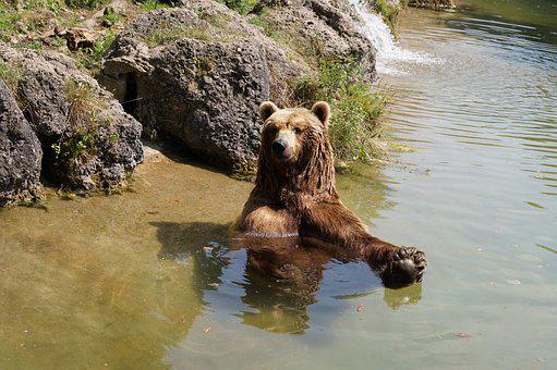 Brown Bear, Bear, Zoo, Nature Park, Animal World, Fur