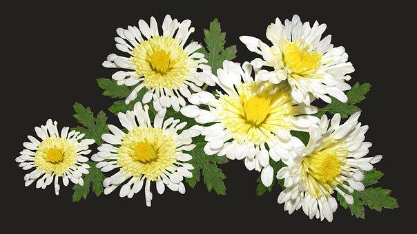 Chrysanthemum, Arrangement, Flowers, Bouquet, Plant
