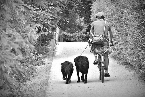 Cyclists, Man, Dogs, Animals, Bike, Cycling, Away