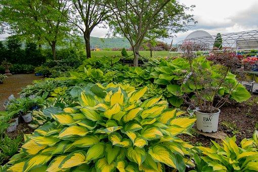 Garden, Green, Environment, Ecology, Plant, Trees