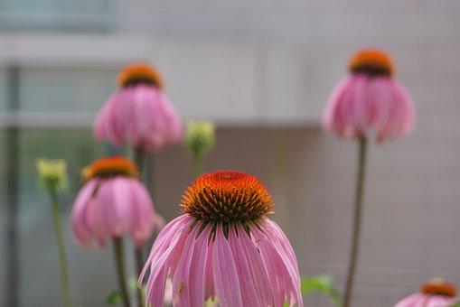 Flower, Beautiful Scene, Seoul National University