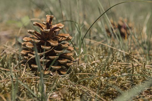 Forest Floor, Tap, Nature, Forest, Moss, Pine Cones