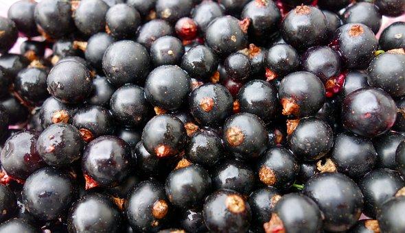 Currants, Fruit, Food, Berries, Garden, Sour, Ripe