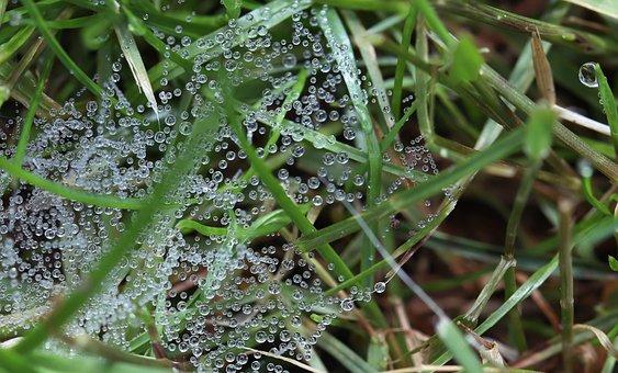 Drip, Dew, Cobweb, Network, Grass, Drop Of Water