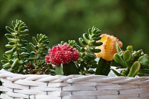 Plants, Fat Plants, Cactus, Trash, Green, Botany