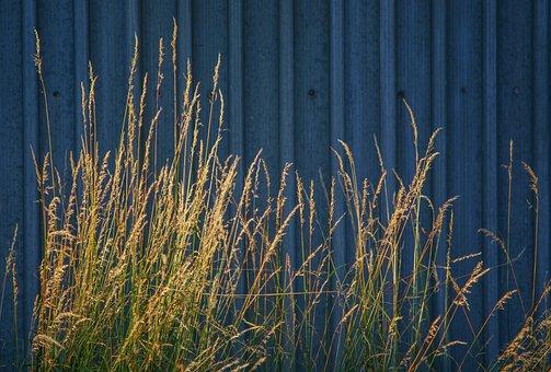 Nature, Architecture, Grass, Green, Yellow, Shining
