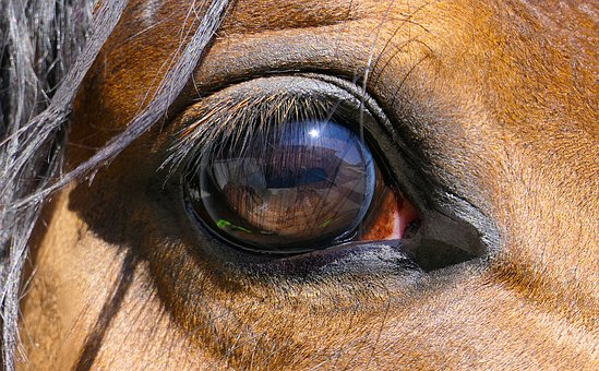 Horse, Eye, Close-up, Reflections, Portrait, Sun