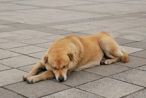 Dog, Stray Dog, Brown, Looking Forward To, Pets, Puppy