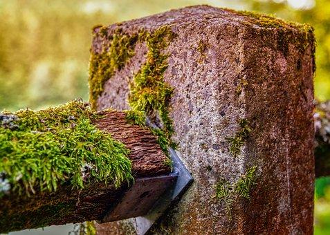 Nature, Moss, Lichen, Fouling, Post, Concrete, Pillar