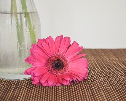Flower, Pink, Blossom, Plant, Nature, Bloom, Summer