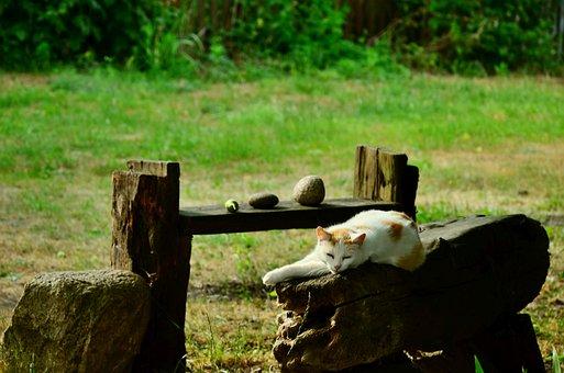 Suchowola, Podlaskie, Poland, Cat