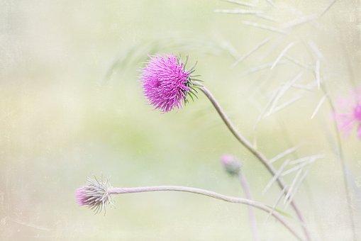Flower, Purple, Purple Flower, Pointed Flower