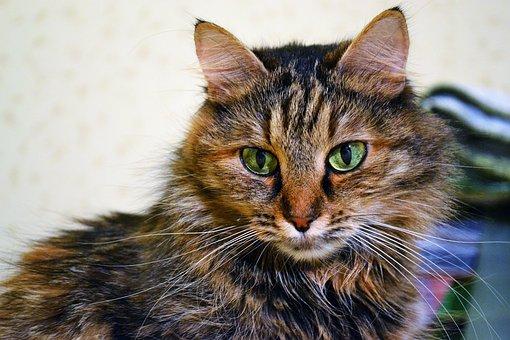 Cat, Redhead, Eyes, Animal, Pet, Cat Portrait, Each