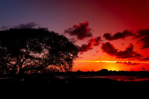 Sunset, Tree, Silhouette, Glowing Red Clouds, Dramatic