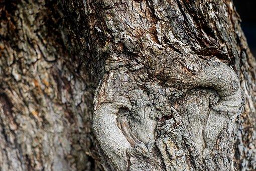 Olive Tree, Wood, Bark, Tree, Old, Gnarled, Tribe