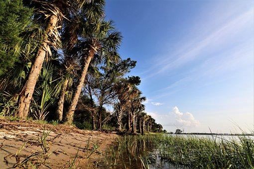 River, Palm, Grass, Nature, Sky, Beach, Row, Trees