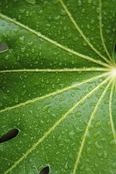 Leaf, Raindrops, Nature, Drip, Wet, Green, Summer