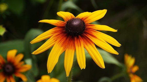 Flowers, Travel, Yellow, Korea, This Type, Summer