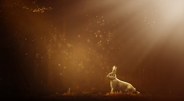 Hare, Forest, Nature, Rabbit, Animal, Mammal, Wild