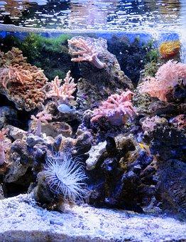Aquarium, Marine Aquarium, Reefs, Reef Aquarium