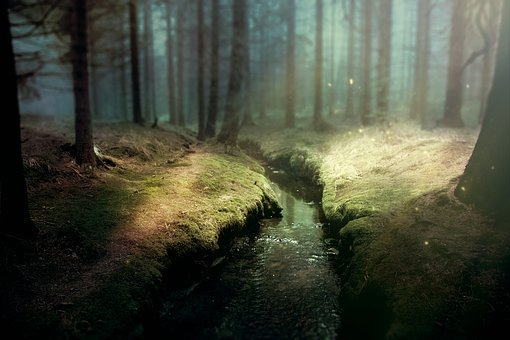 Background Image, Fantasy, Forest, Bach, Glade, Trees