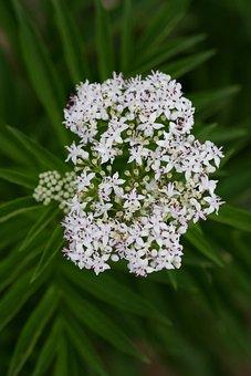 Flower, White, Bundle, Bouquet, Nature, Spring