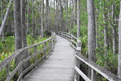 Bridge, Lonely, Nature, Landscape, Travel, Trees, Park