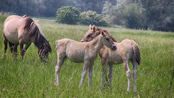 Small Children, Foals, Spring, Polder, Meadow, Pasture