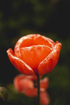 Flower, Québec, Quebec City, Garden, Nature, Orange