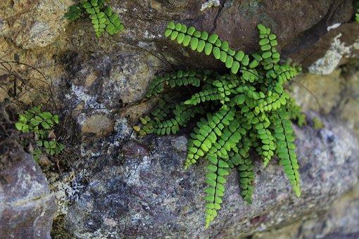 Nature, Leaves, Green, Spring, Flower, Strength, Rock