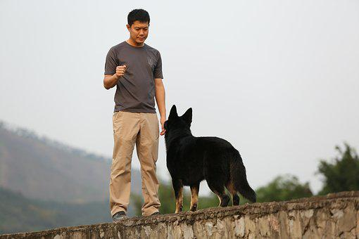 Shepherd, Training, Harmony, Dog, Man, Boy