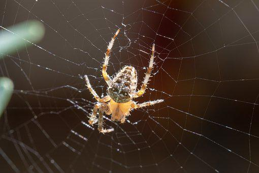 Nature, Insect, Spider, Network, Six Legs