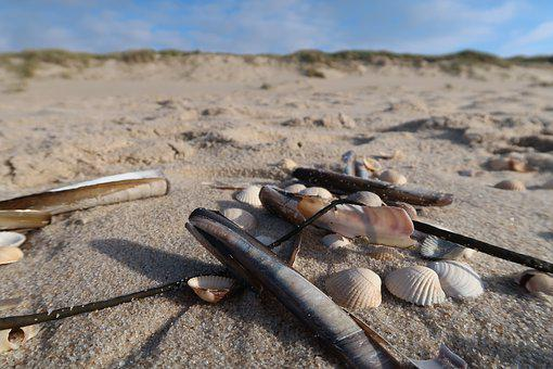 Beach, North Sea, Sand Beach, Shell, Sand, Sea
