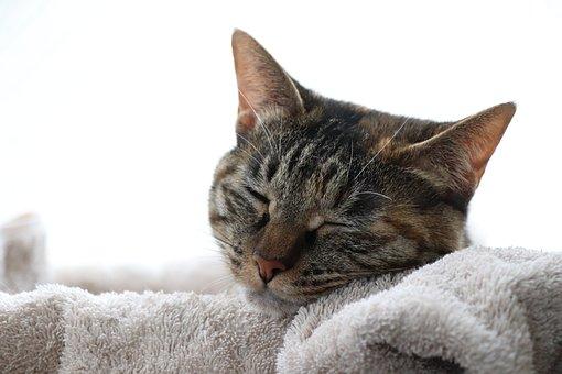 Cat, Animal, Sleep, Take A Nap