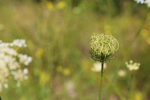 Flower, Plant, Spring, Dirt