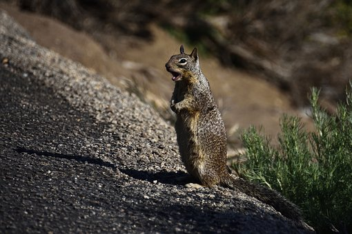 Squirrel, Nature, Animal, Cute, Rodent, Animal World