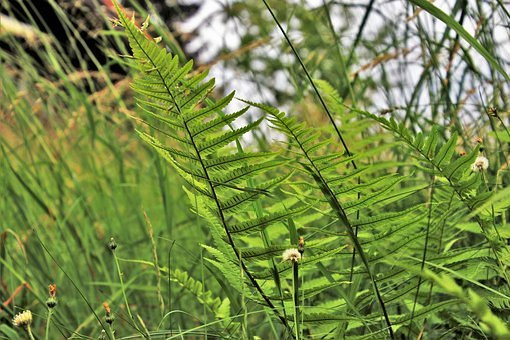 Ferns, Alpine, Grass, Meadow, Plant, Sunny, Green