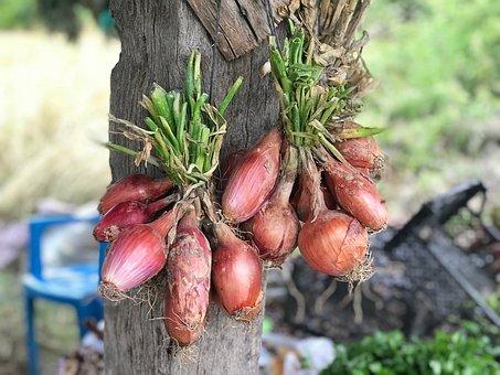 Onion, Hanging, Food, Garden, Macro, Farm, Time, Drying