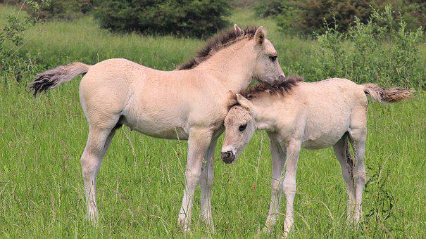 Horses, Foals, Together, Love, Maternal Love