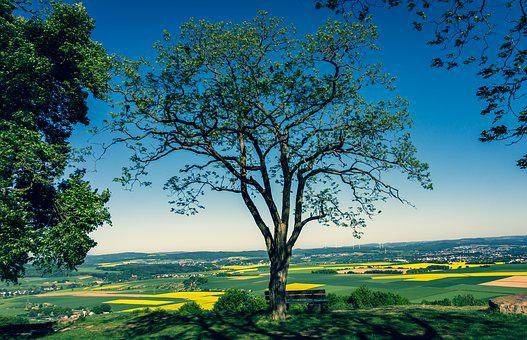 Tree, View, Fields, Oilseed Rape, Landscape, Nature