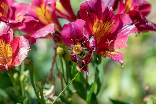Nature, Insect, Wild Bee, On Flower