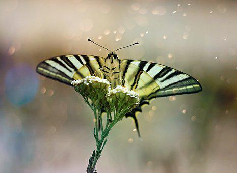 Butterfly, Dovetail, Wings, Insect, Plant, Rest